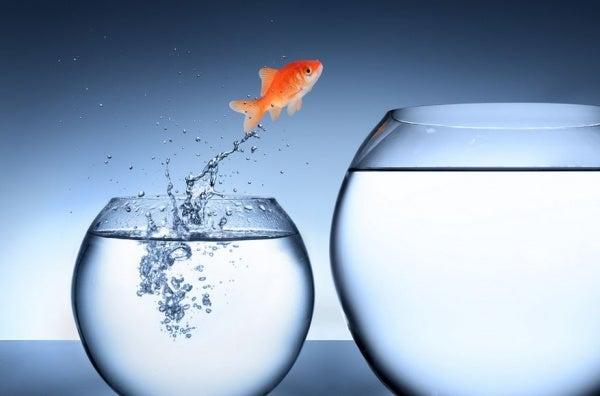 Obstakels zijn kansen voor groei