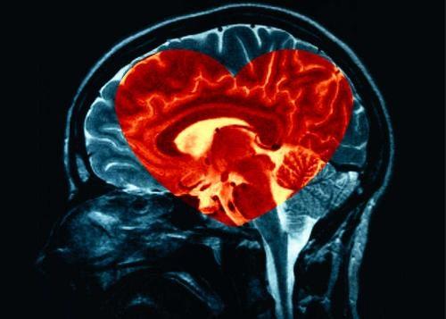 Hersenen en Hart