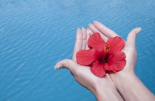 Dankbaarheid: het geheime ingrediënt