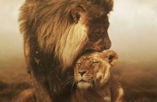 Een Leeuw En Een Leeuwin Die Elkaar Knuffelen En Zij Hebben Ook Behoefte Aan Waardering