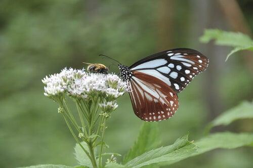 Fladder als een vlinder, steek als een bij