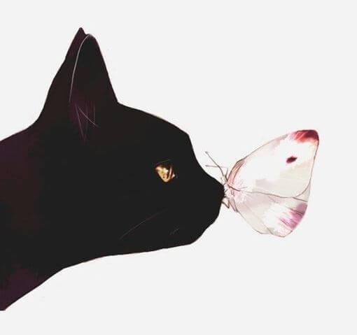 Kat en Vlinder
