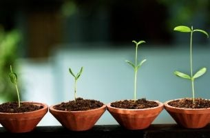 Plantjes Die Groeien Als Symbool Voor Emotionele Groei.