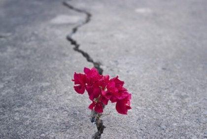 Bloemen groeien uit droge grond als symbool voor een kans