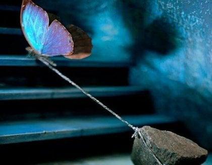 Vlinder die een steen trekt als voorbeeld van kracht