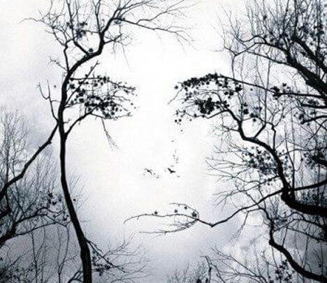 Gezicht in Bomen