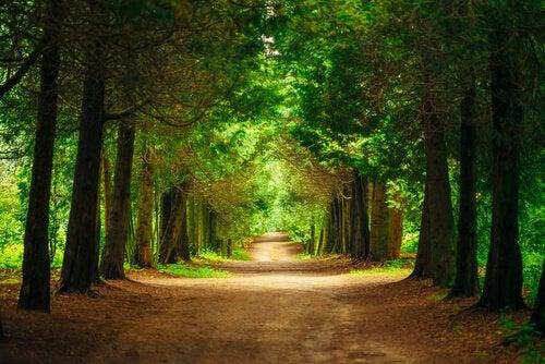 Een Zeer Mooie Bosweg