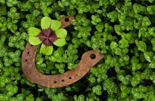 Een hoefijzer tussen de klavertjes vier als symbool voor geluk