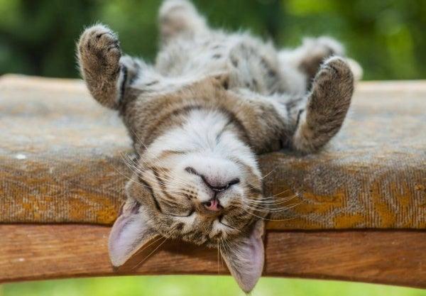 Vier psychologische voordelen die een dutje biedt