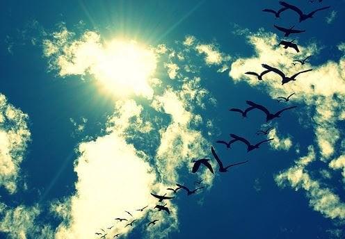 Wegvliegen
