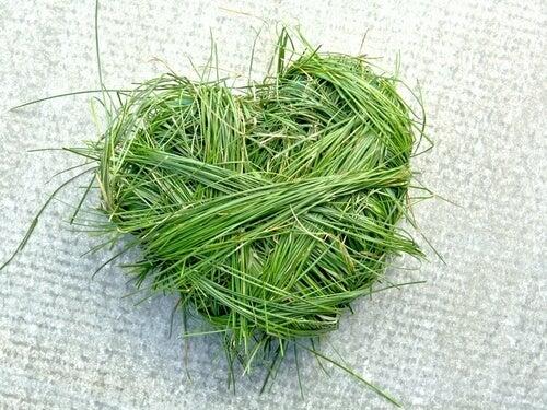 Hart van Gras