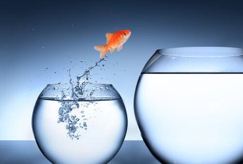 Vis Springt uit Kom