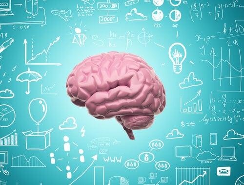 Dankzij neurale plasticiteit stoppen we nooit met leren