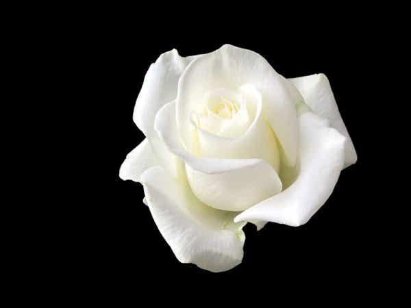 Sophie Scholl: de vrouw die Hitler trotseerde met een witte roos