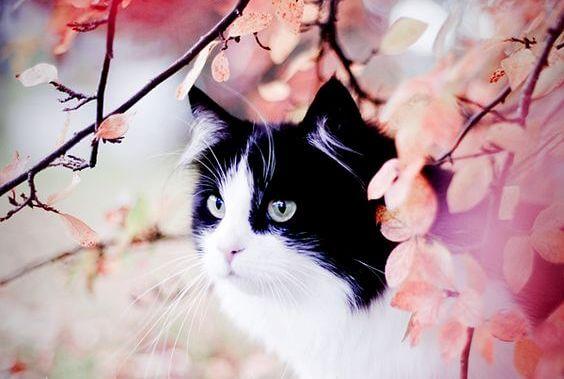 Het verhaal van de gevlekte kat en de zwaluw Sinha