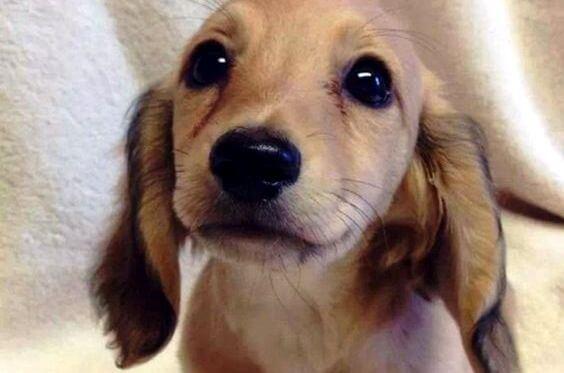 De ogen van onze huisdieren spreken een unieke taal
