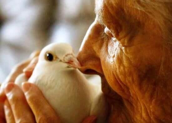 Oude Man met Vogel