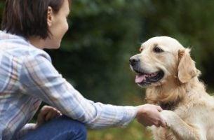 Hond Die Een Vrouw Zijn Pootje Geeft