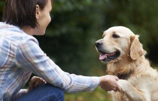 Hoe herkennen honden gezichten?