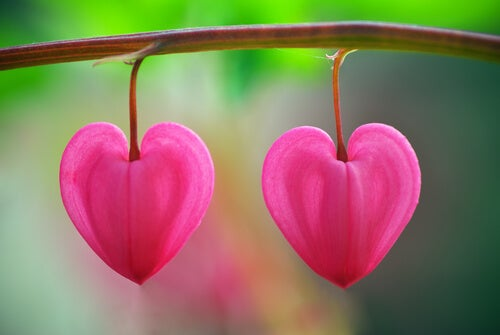 Bloemen in de woestijn: een les in het herkennen van (de) liefde