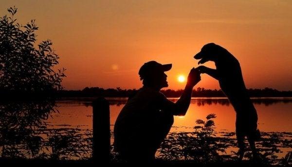 Man En Hond Bij Zonsondergang
