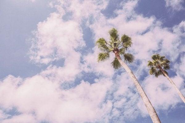Palmbomen Tegen De Lucht