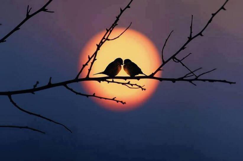 Twee Vogeltjes Op Een Takje