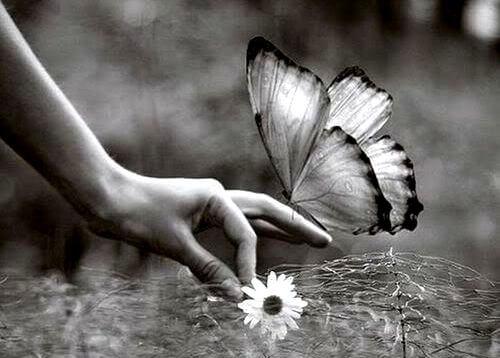 Vlinder Op Een Hand Die Een Bloem Vasthoudt