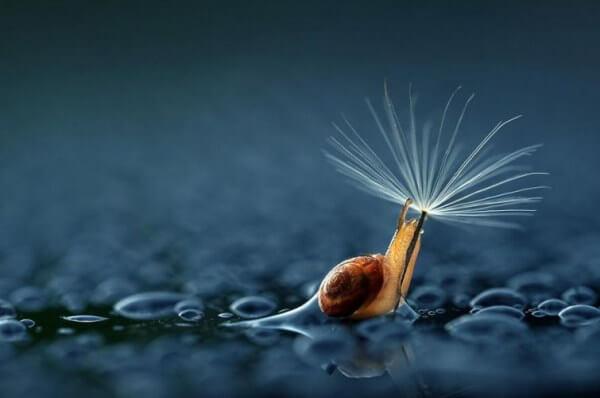 Slak Die Met Een Paardenbloem Bij Zich Door De Regen Loopt Als Symbool Voor De Waterval Aan Tranen Die We Laten Wanneer We Hartverscheurend Huilen