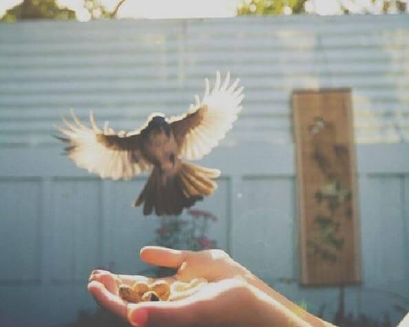 Vrouw Die Een Vogel Vrijlaat Uit Haar Hand Als Symbool Voor Vrijheid En Eigenliefde