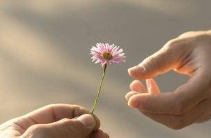 Een Roze Bloem Met Twee Handen Als Symbool Want Ware Liefde Vereist Volwassenheid
