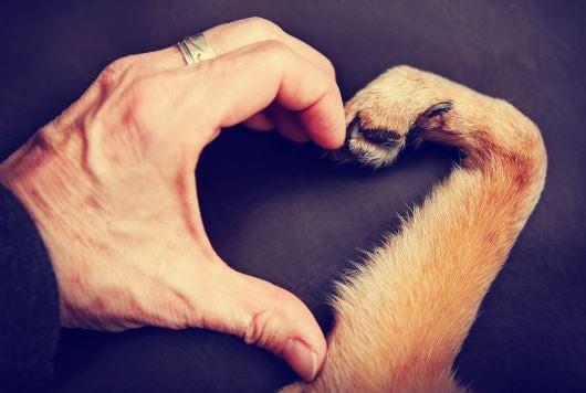 Een Mannenhand En Hondenpoot Die Samen Een Hartje Vormen Voordat De Hond Over De Regenboogburg Moet