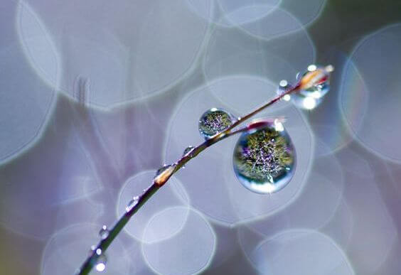 Takje Met Regendruppels Eraan Als Symbool Voor De Tranen Die We Laten Wanneer We Hartverscheurend Huilen