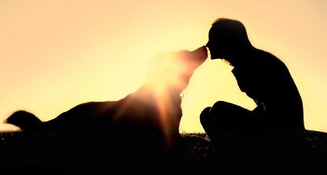Vrouw Die Met Haar Hond Speelt Voordat Hij Over De Regenboogbrug Moet
