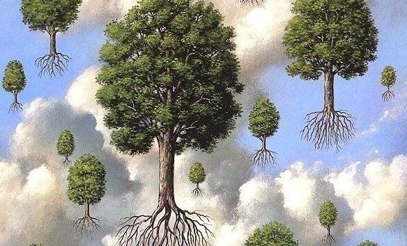 Bomen Die In De Lucht Hangen En Zeggen Je Kunt Je Dromen Waarmaken