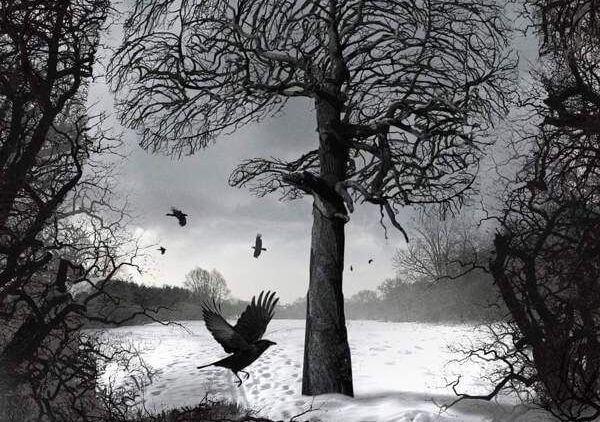 Afbeelding van een besneeuwd bos met vogels erboven
