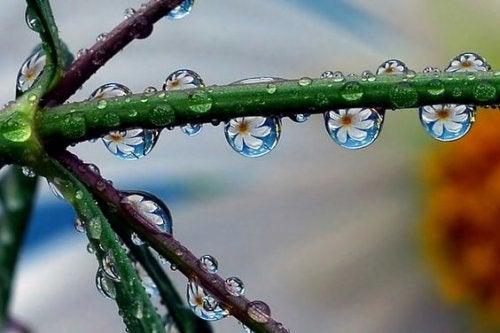 Takje waar druppels regen aan hangen waar bloemetjes in te zien zijn