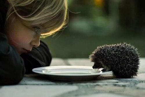 Meisje dat kijkt hoe een egeltje drinkt van een bordje melk dat zij heeft neergezet want vriendelijk is goed voor alles