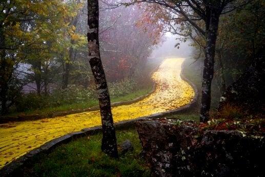 Een mooie gele bosweg