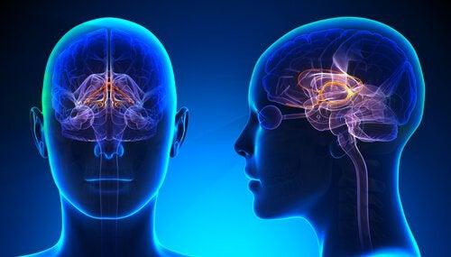 Hersenverbindingen in het hoofd van een pop