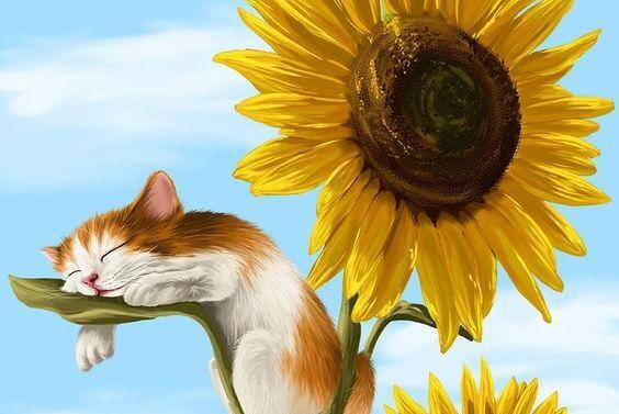 Een katje dat op het blad van een zonnebloem slaapt