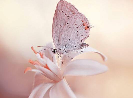 Witte Vlinder Die Op Een Witte Bloem Zit