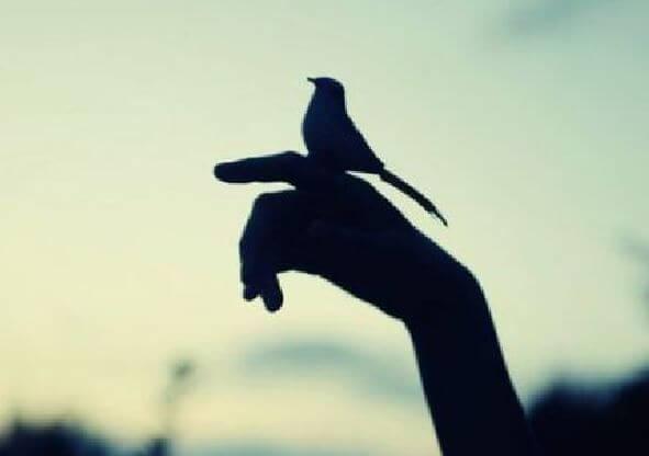 Vogel zit op hand.