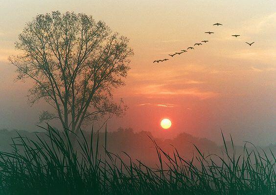 Foto Van Een Ondergaande Zon En Vogels In De Lucht Die Zeggen: Laat Alles Vloeien
