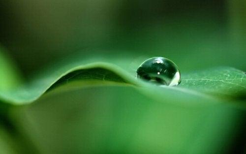 Een regendruppel op een groen blad