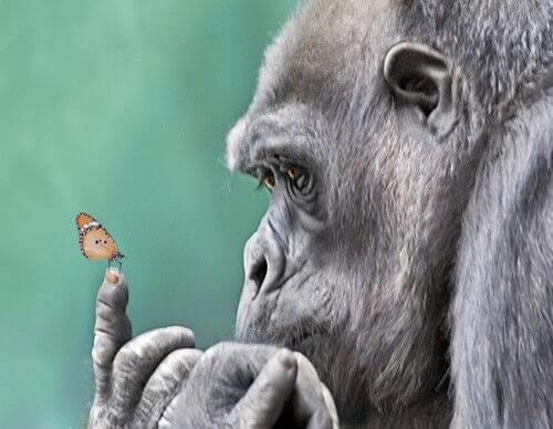 Aap met vlinder op zijn vinger