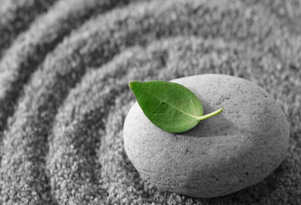 Groen blaadje op een steen