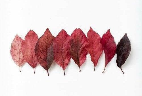 Rode bladeren op een rij