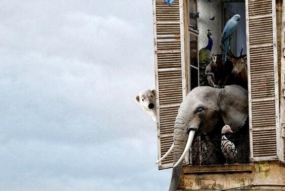 Allemaal dieren die uit een raam hangen