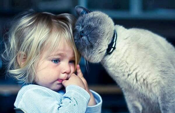 De kat als therapie: 5 voordelen van leven met een kat